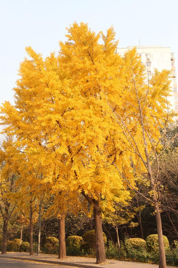 微信头像秋天风景人物