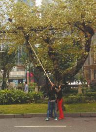 9月16日,太升南路,市民拿着长杆在树上采蘑菇。
