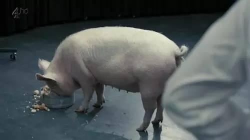 卡梅伦日猪是真的吗_写书爆料卡梅伦当年x过猪