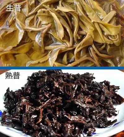 普洱的生茶和熟茶_普洱生茶与熟茶的五大区别