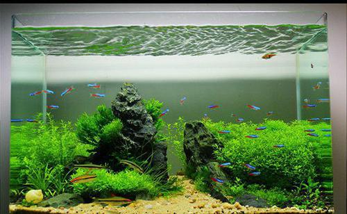 想在鱼缸里放点石头造景