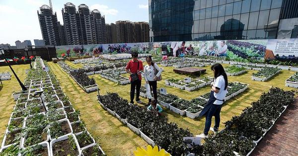 """武汉高楼屋顶建起""""天空农场"""""""