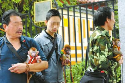 """10月5日,成都武侯祠大街,几个外地人靠小猴子""""卖萌""""挣钱。"""