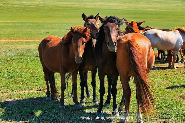 实拍蒙古国牧民的真实生活图片