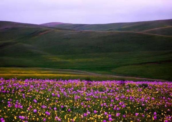 伊犁阿克塔斯草原