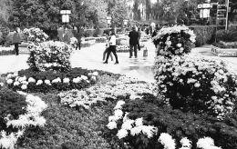 10月4日,晋中市民在城区玉湖公园内赏菊。该公园所举办的迎国庆菊花展成为市民在国庆黄金周的休闲好去处。