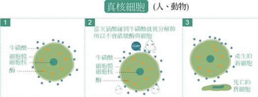 """SK-japan家用喷洒消毒机由日本SK株式会社出品,进入中国后由广东省微生物分析检测中心检测合格。检测表明:该产品对水果蔬菜中的""""敌敌畏、乐果""""农药残留去除率达""""97.9%;对衣物及人体皮肤表面的""""大肠杆菌、金黄色葡萄球菌""""达到99.999%的灭杀率;对生活中易传播的""""白色念珠菌""""达到99.84%灭杀率。SK-japan家用喷洒消毒机采用微电脑控制技术,以食盐水为原料,只需要3分种就可以制造出安全无毒,国际公认的的电解次氯酸消毒水,可对我们的衣、食、住、用、行及人体皮肤等方面进行全面、彻底的消毒保健,其特点是安全、卫生、环保、无毒,家用消毒经济实惠,受到了美国、日本市场的肯定和欢迎。"""