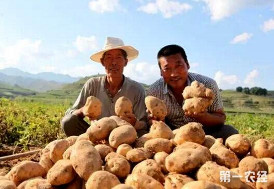 农村致富的带头人.在他带动和帮助下,山西省吕梁市岚县王狮乡石桥图片