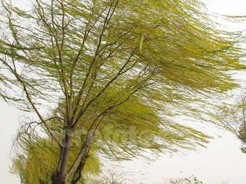 刮大风抱树图片卡通