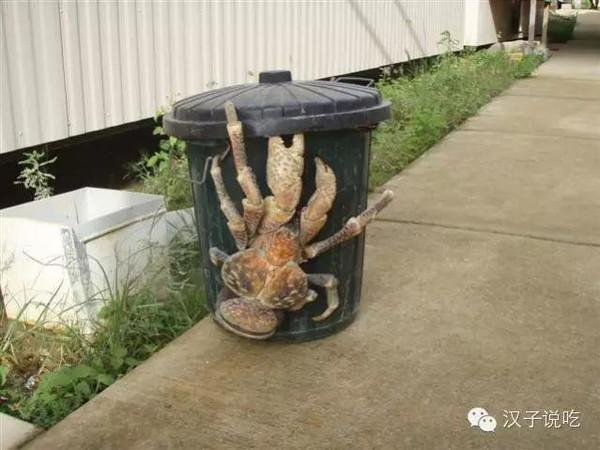 世界上最大的螃蟹,你敢吃吗
