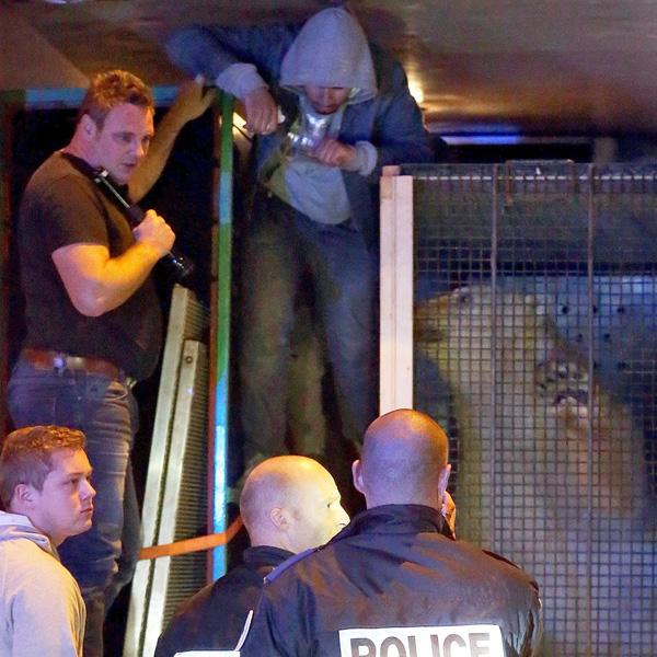 10月13日,3名灾黎为了偷渡进入英国,不吝与北极熊同车。(图像来历:英国媒体)