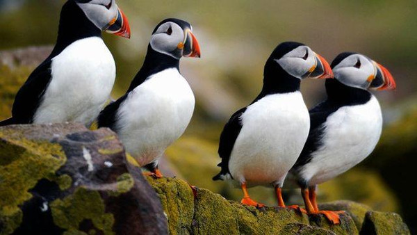 冰岛梦想中的极光圣地,冰岛旅行指南
