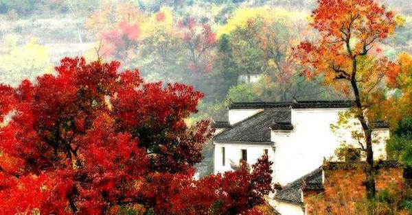 安徽丨宏村秋天,從水墨畫里走來圖片