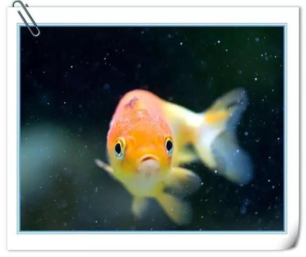 鱼的记忆只有七秒   【感慨】多希望自己是一条鱼,很快忘却所有悲伤.