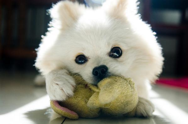 狗狗吃内脏会有什么坏处