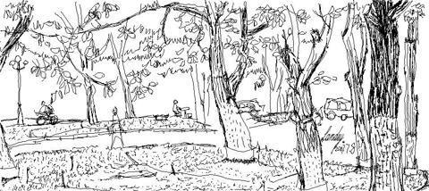 桃花树 铅笔画