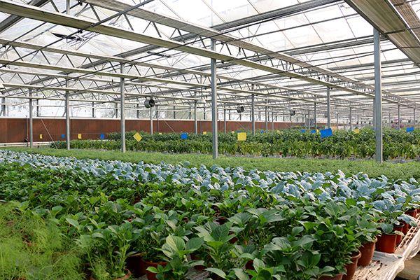 壁纸 成片种植 风景 植物 种植基地 桌面 600_400