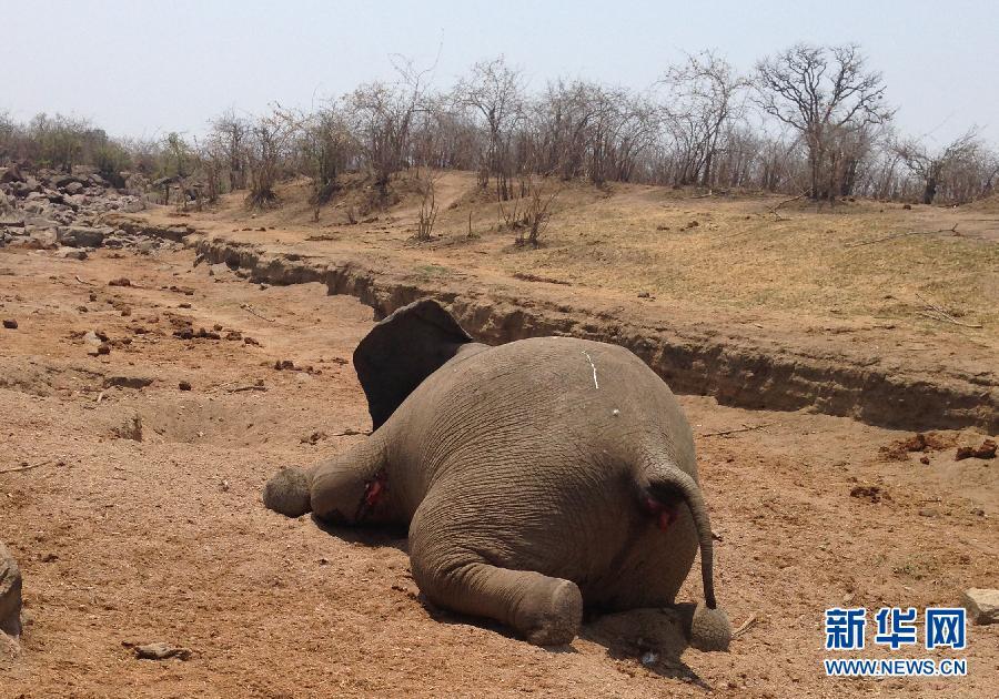 国际动物保护组织数据显示