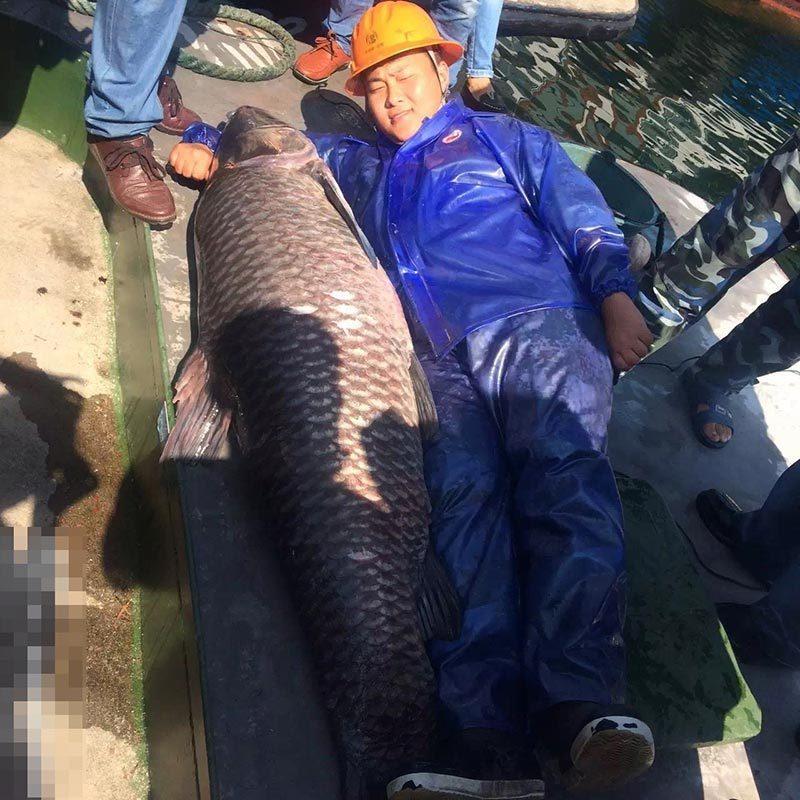 杭州千岛湖捕到180斤大鱼王 身价或过万