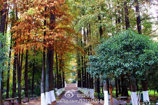 武汉植物园最美秋景【主题游:户外】