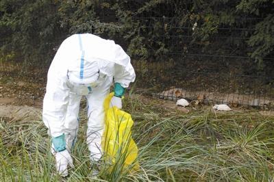 朝阳疾控中心的工作人员在现场抓捕白鼠