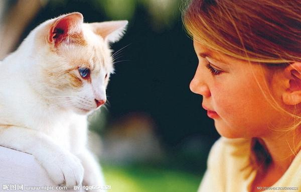 猫咪抓人怎么教育图片