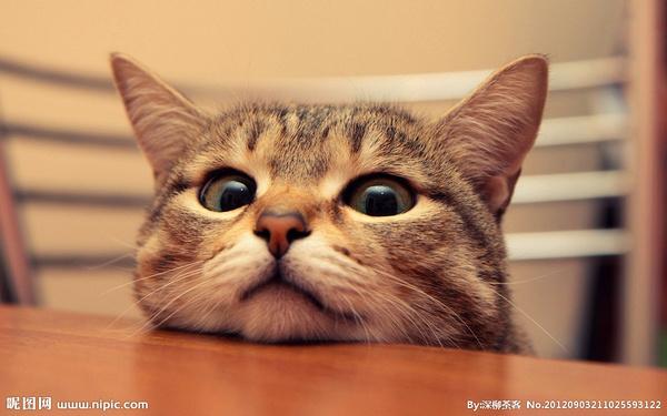 猫咪恨主人的十种表现图片