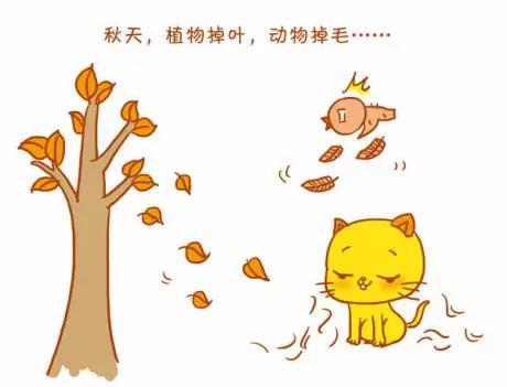 秋天植物掉叶,动物掉毛
