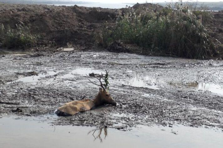 挖掘机技术哪家强?挖掘机师傅巧救陷泥潭麋鹿