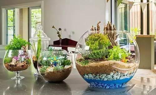 废物利用做花盆,太美,太厉害了!