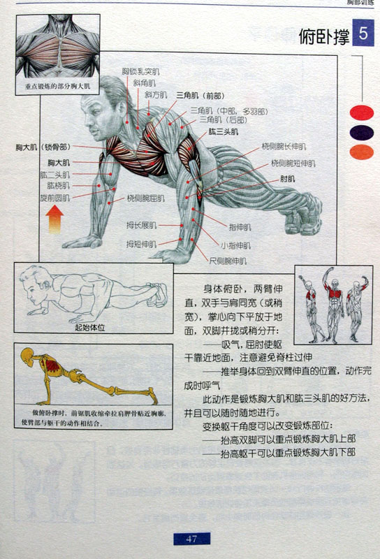 胸部: 1:俯卧撑:建议30个一组(这是力量练习,如果希望肌肉快速增长