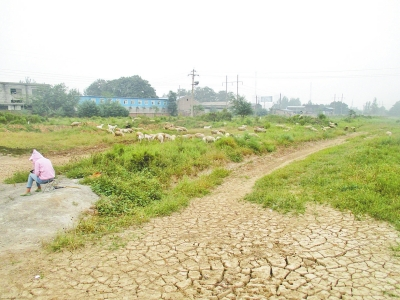 三门峡百亩耕地被征用后荒8年 村民复耕遭阻拦