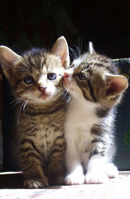 猫咪都是高傲的动物,所以分开的食碗水碗是必要的,分开的猫砂盆也是