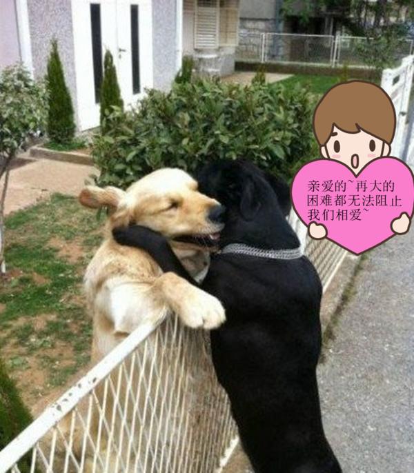 如何知道狗身上有没有跳蚤 狗身上长跳蚤怎么办