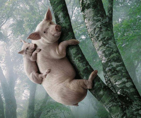 就料得到小猪一定不会去按杠杆,所以为了能有东西吃,大猪只能自己去按图片