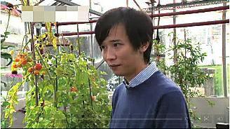 """在26日出版的英国著名杂志《自然·通讯》上,刊载了英国约翰·英尼斯中心的科学家通过转基因技术培育出能治病的""""超级西红柿""""的文章,引发关注。一个""""超级西红柿""""中的白藜芦醇含量相当于喝50瓶红酒,金雀异黄素的含量相当于吃5斤豆腐,而白藜芦醇能对抗心脏病、癌症、糖尿病以及阿尔茨海默氏症等。"""