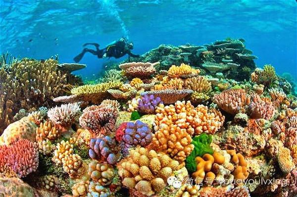珊瑚丛简笔画