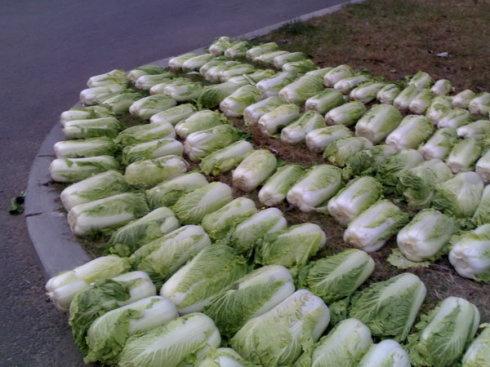 保护好秋季丰收的蔬果