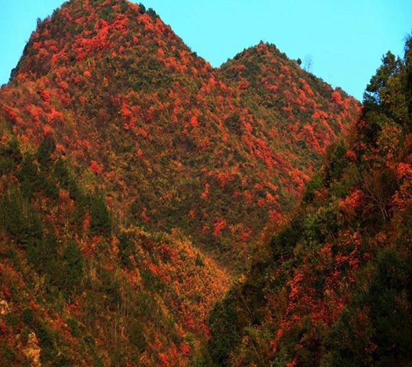 片片红叶寄深情,安康汉滨区茨沟镇人民欢迎您