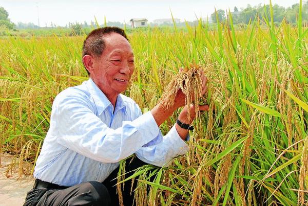 湘米产业或遭狙击 湖南股权大佬力挺 超级稻