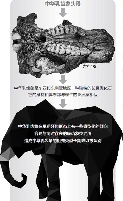 昆明信息港综合整理近日,美国《哺乳动物进化》杂志发表了一篇关于云南昭通发现的最早的中华乳齿象头骨化石研究的文章。通过对这块化石的研究,研究人员把中华乳齿象的化石记录又向前推进了约一百万年,并且把中华乳齿象最早的起源地推向了云南含古猿的晚中新世地层分布区。这项成果有望解开长期以来困扰古生物学界的中华乳齿象的起源和迁徙谜团。