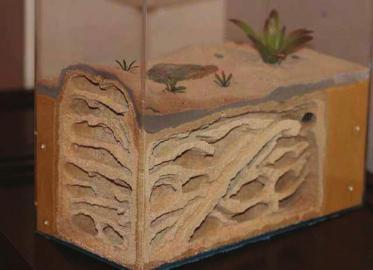 奇葩宠物玩家:千元买蚂蚁 看它们搬家、产卵