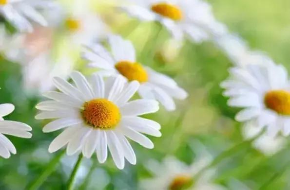 数列之花处处盛开 植物与数学