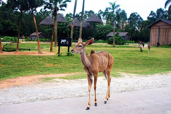广州长隆动物园,珍稀动物的天堂