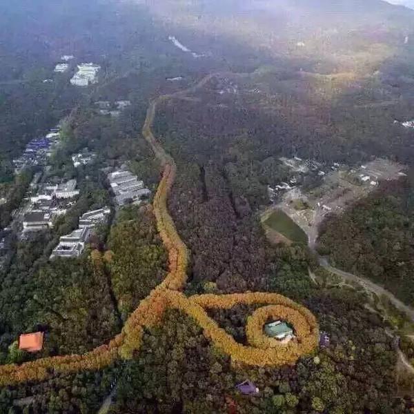 """南京中山陵最美""""项链""""景观"""
