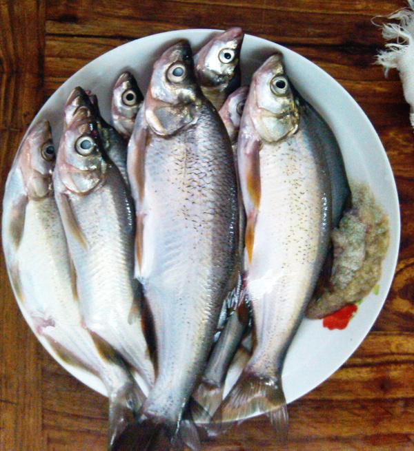太湖威望-v威望老鼠刷美食版美食大战手机白鱼图片