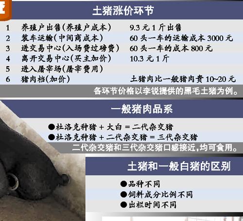 媒体揭秘土猪饲养真相:也集中栏养吃饲料(图)