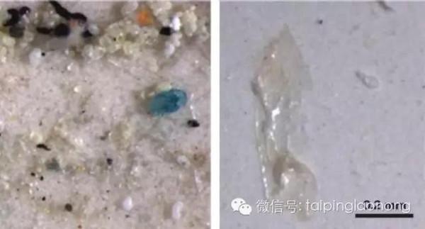 塑料制品对自然环境的严重影响