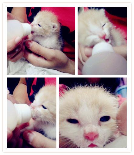 猫能喝奶粉图片