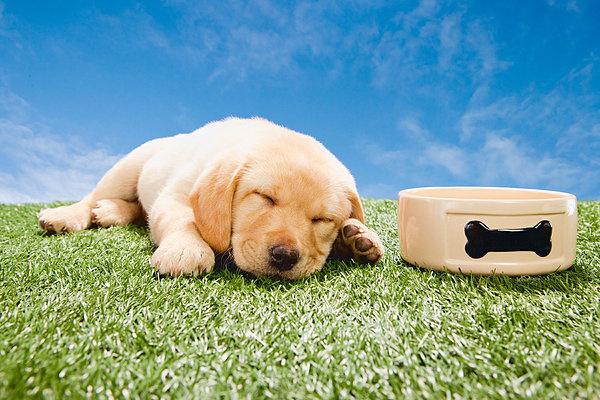 育狗经验狗狗感冒了怎么办怎么预防狗狗感冒